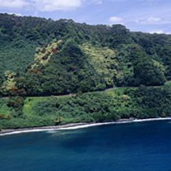 Forest On An Island, Hana, Maui, Hawaii, USA
