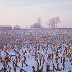 USA, Illinois, farm, winter