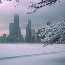 Snow covered tree on the beach with a city in the background, North Avenue Beach, Chicago, Illinois, USA