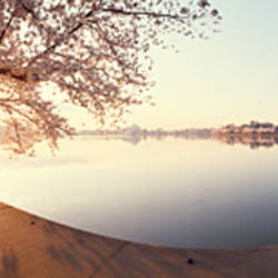 Cherry blossoms at a lakeside, Tidal Basin, Washington DC, USA