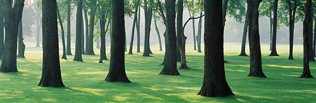 Trees in a lawn, British Columbia, Canada