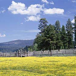 Wildflowers in a field, Fremont National Forest, Lakeview, Oregon, USA