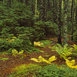 Trees in a forest, Acadia National Park, Maine, USA