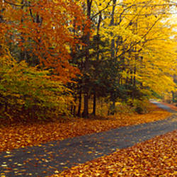 Road passing through autumn forest, Chestnut Ridge County Park, Orchard Park, Erie County, New York State, USA