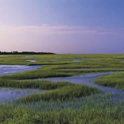 Salt Marsh, Florida, USA