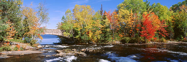 Trees Near A River, Bog River, New York State, USA