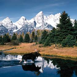 Moose & Beaver Pond Grand Teton National Park WY USA