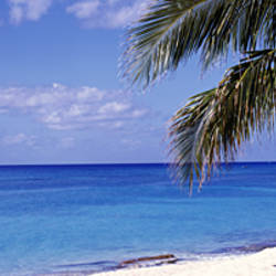 Palm tree on the beach, Seven Mile Beach, Grand Cayman, Cayman Islands
