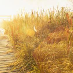 Grass on the both sides of a pier, Laurel Pond, Pokagon State Park, Indiana, USA