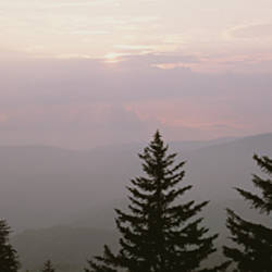 Silhouette of trees, Blue Ridge Parkway, North Carolina, USA