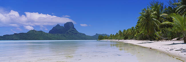 Palm Trees On The Beach, Bora Bora, French Polynesia