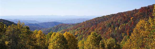 High angle view of a forest, Blue Ridge Parkway, North Carolina, USA