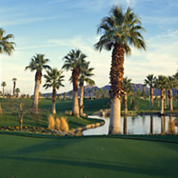 Palm trees in a golf course, Desert Springs Golf Course, Palm Springs, Riverside County, California, USA