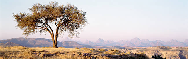 Tree in a field with a mountain range in the background, Debre Damo, Tigray, Ethiopia