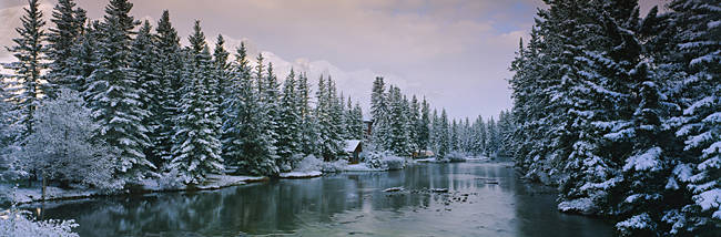 Evergreen trees covered with snow, Policeman's Creek, Canmore, Alberta, Canada