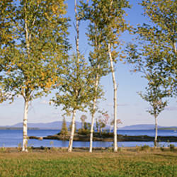 Trees along a lake, Moosehead Lake, Maine, USA