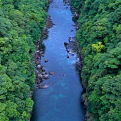 Rain Forest Kagoshima Yaku Island Japan