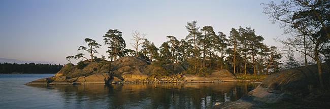 Pine trees on an island, Backa, Gothenburg, Hisingen, Bohuslan, Sweden