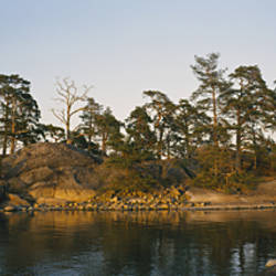 Pine trees on an island, Backa, Gothenburg, Hisingen, Bohuslan, Sweden