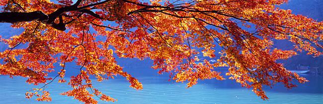 Autumn leaves, Hozu River, Kyoto City, Kyoto Prefecture, Saga Prefecture, Japan