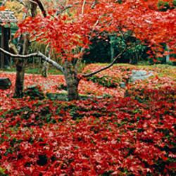 Trees in a park, Enri-An Temple, Sagano, Kyoto Prefecture, Japan