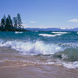 Trees along a lake, Lake Tahoe, Nevada, USA
