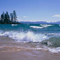 Trees along a lake, Lake Tahoe, Nevada, USA