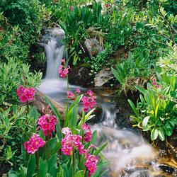 Waterfall CO USA