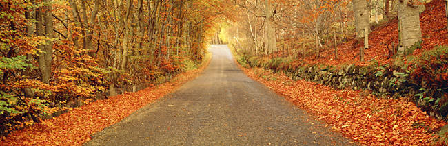 Autumn Road Scotland