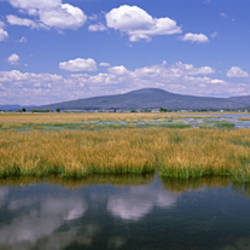View Of Weeds In The Wetlands, Meiss Lake National Wildlife Refuge, California, USA