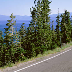 Pine trees on both sides of Highway 89, Lake Tahoe, California, USA