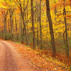 Path Hickory Run State Park PA USA
