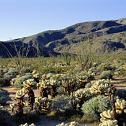 Coyote Canyon, Anza Borrego Desert State Park, California, USA