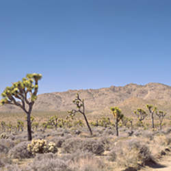 Road passing through an arid landscape, Joshua Tree National Monument, California, USA