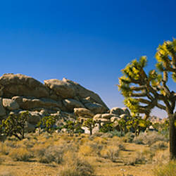 Rock formations on a landscape, Joshua Tree National Monument, California, USA