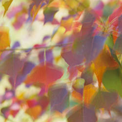 Close-up of leaves, Louisiana, USA
