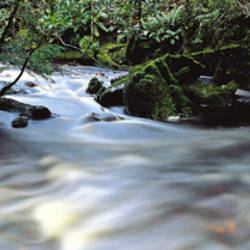 Bird River, Tasmania, Australia