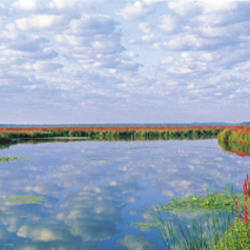 Montezuma National Wildlife Refuge, New York State, USA