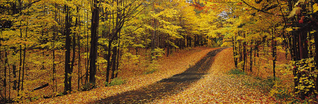 Autumn Road, Emery Park, New York State, USA