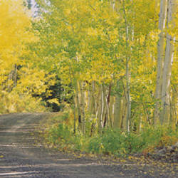 USA, Colorado, Telluride, road, autumn