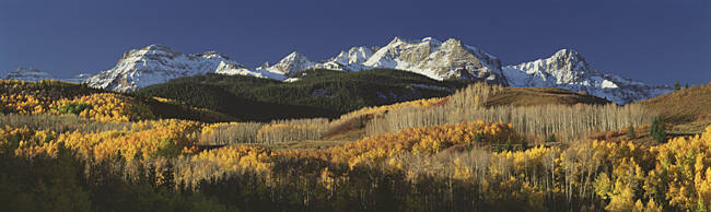 Autumnal View Of Aspen Trees And The Rocky Mountains, San Juan National Park, Colorado, USA
