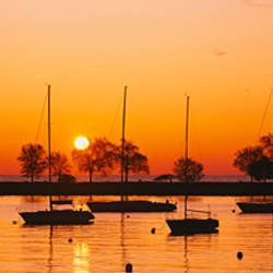 Silhouette of sailboats in a lake, Lake Michigan, Chicago, Illinois, USA