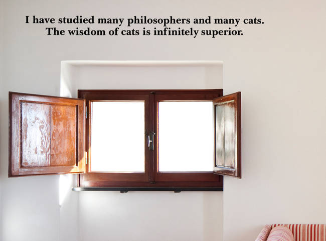 Cat Wisdom - Quote Wall Decal
