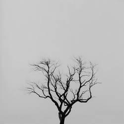 The Westport Tree