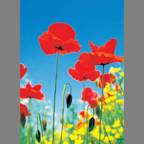 Poppy Field floral mural wallpaper, 4 part: 371