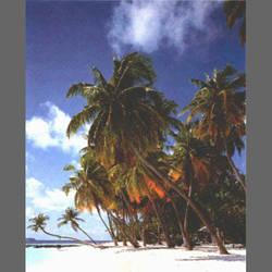 Seychellan Island mural wallpaper, 4 part: 1489