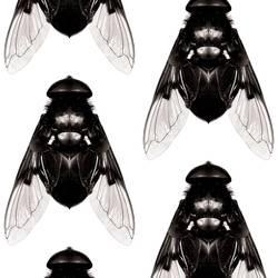 Fly - Black