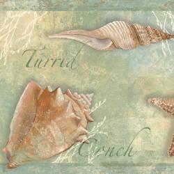 Quinten Green Seashells Toss Border BBC46052B