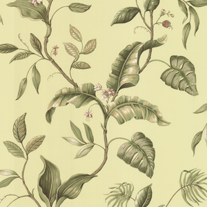Eldora Green Evening Tropics Leaves Wallpaper DLR58422