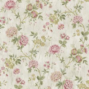 Chrysanthemum Pink Jacobean CCB02212
